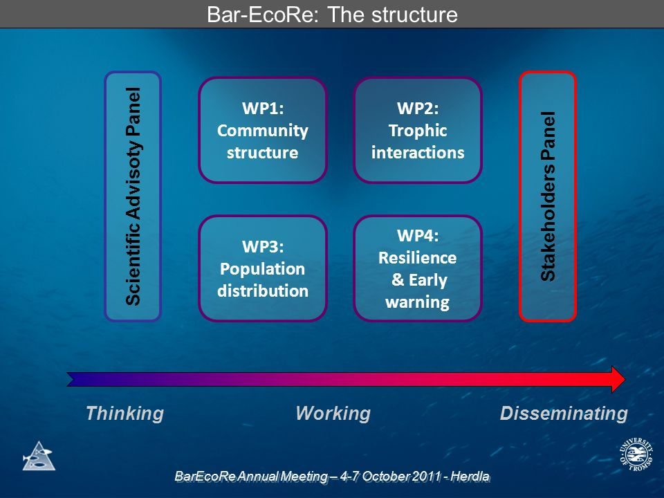 BarEcoRe Annual Meeting – 4-7 October Herdla Bar-EcoRe: The structure WP1: Community structure WP2: Trophic interactions WP3: Population distribution WP4: Resilience & Early warning Scientific Advisoty PanelStakeholders Panel ThinkingWorkingDisseminating