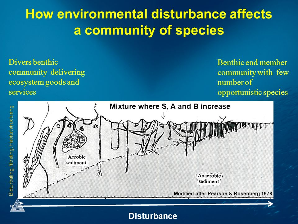 How environmental disturbance affects a community of species Divers benthic community delivering ecosystem goods and services Benthic end member community with few number of opportunistic species Mixture where S, A and B increase Disturbance Modified after Pearson & Rosenberg 1978 Bioturbating, filtrating, Habitat structuring