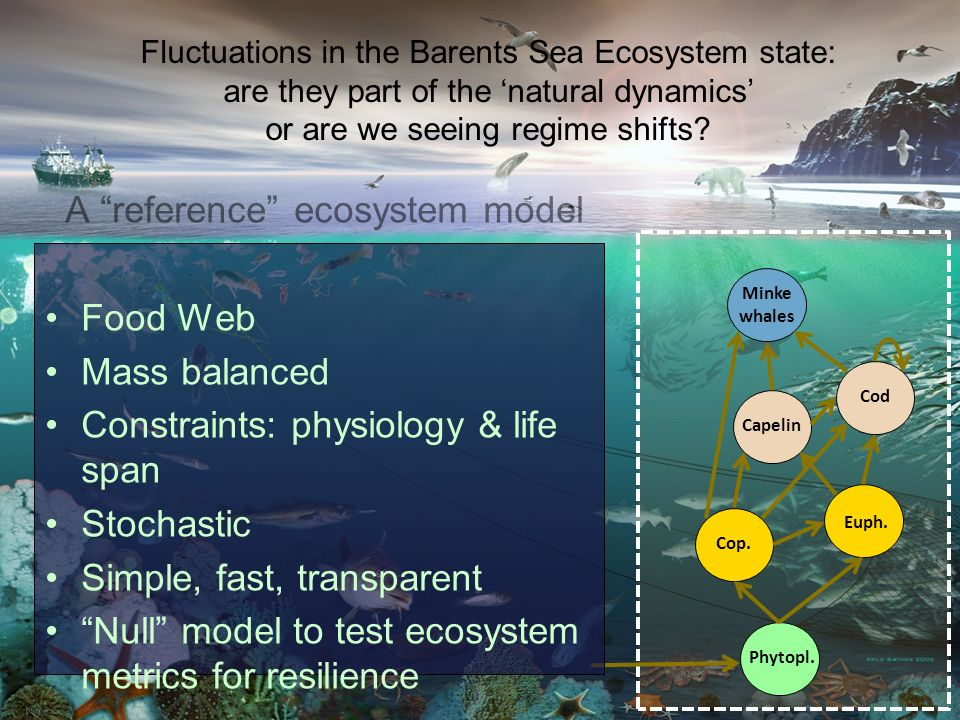 A Dynamic Stochastic Food Web model for the Barents Sea Cop. Euph. Phytopl. Cod Minke whales Capelin A reference ecosystem model Food Web Mass balance