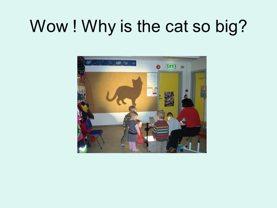 Wow ! Why is the cat so big
