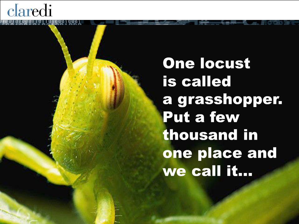 One locust is called a grasshopper. Put a few thousand in one place and we call it…
