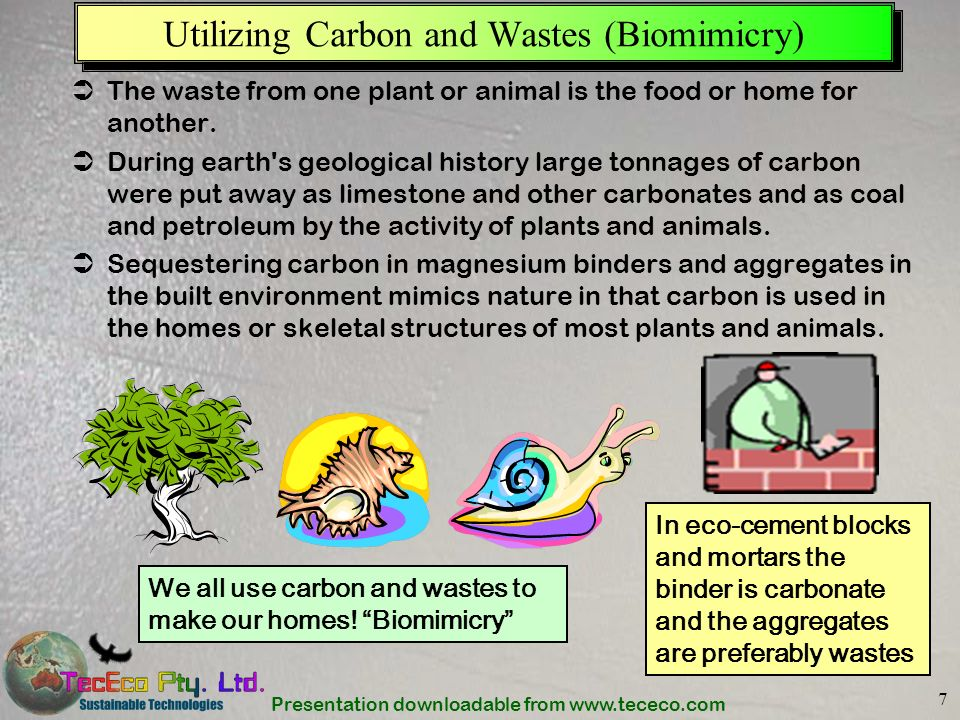 Presentation downloadable from www.tececo.com 7 Utilizing Carbon and Wastes (Biomimicry) The waste from one plant or animal is the food or home for an