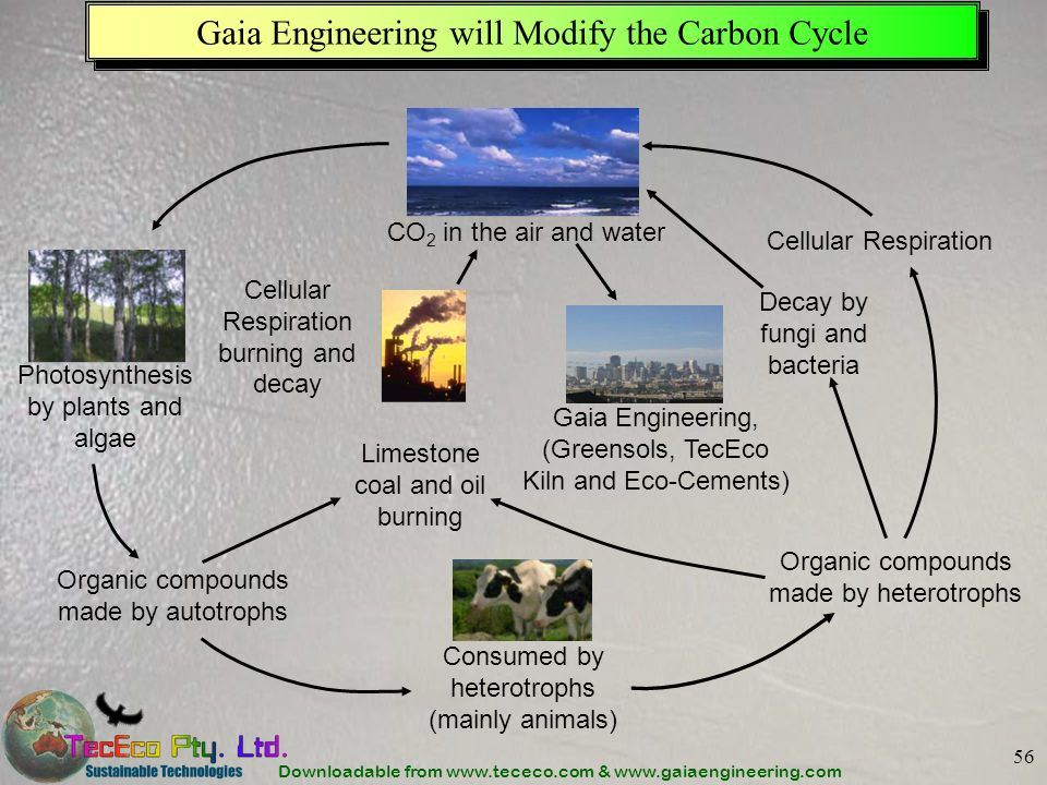 Downloadable from www.tececo.com & www.gaiaengineering.com 56 Gaia Engineering will Modify the Carbon Cycle Photosynthesis by plants and algae Consumed by heterotrophs (mainly animals) Organic compounds made by autotrophs Organic compounds made by heterotrophs Cellular Respiration Cellular Respiration burning and decay Limestone coal and oil burning Gaia Engineering, (Greensols, TecEco Kiln and Eco-Cements) Decay by fungi and bacteria CO 2 in the air and water