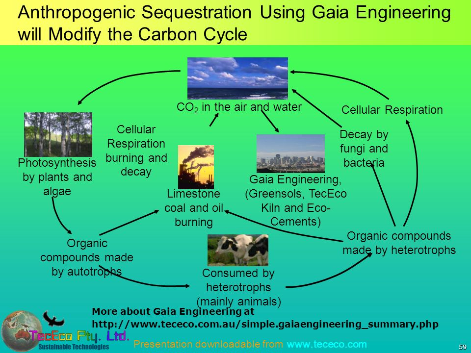 Presentation downloadable from   59 Anthropogenic Sequestration Using Gaia Engineering will Modify the Carbon Cycle Photosynthesis by plants and algae Consumed by heterotrophs (mainly animals) Organic compounds made by autotrophs Organic compounds made by heterotrophs Cellular Respiration Cellular Respiration burning and decay Limestone coal and oil burning Gaia Engineering, (Greensols, TecEco Kiln and Eco- Cements) Decay by fungi and bacteria CO 2 in the air and water More about Gaia Engineering at