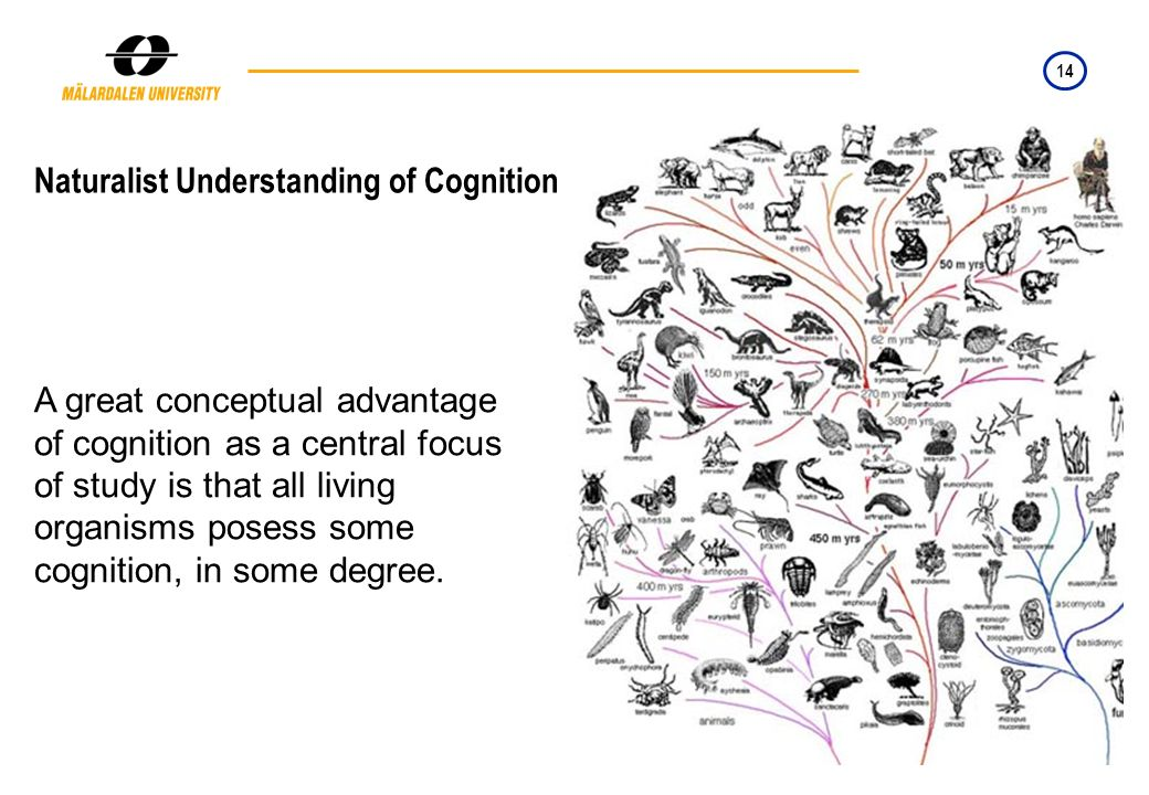 14 Naturalist Understanding of Cognition A great conceptual advantage of cognition as a central focus of study is that all living organisms posess som