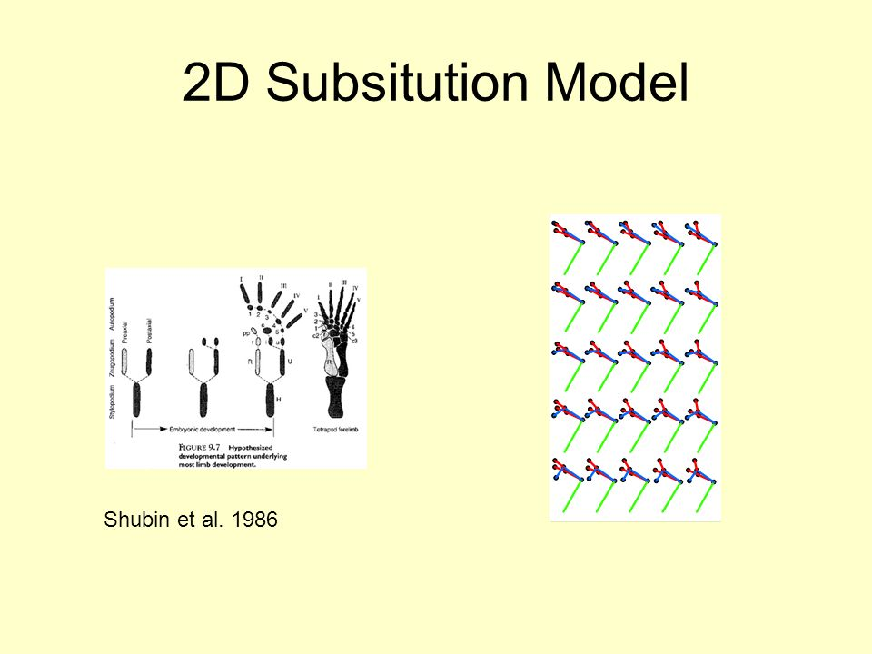 2D Subsitution Model Shubin et al. 1986