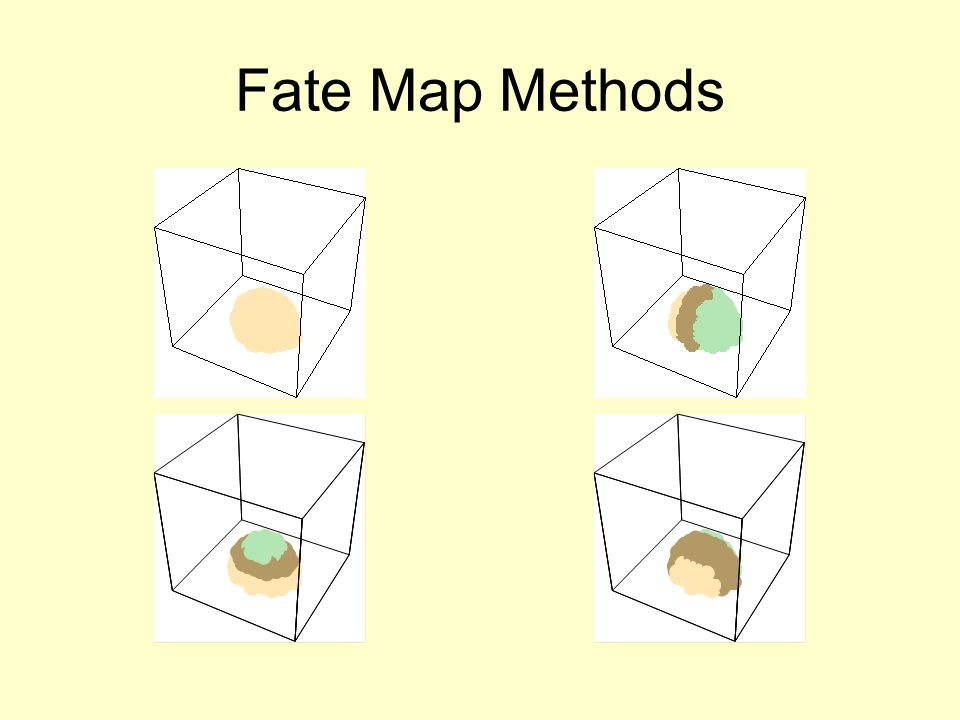 Fate Map Methods