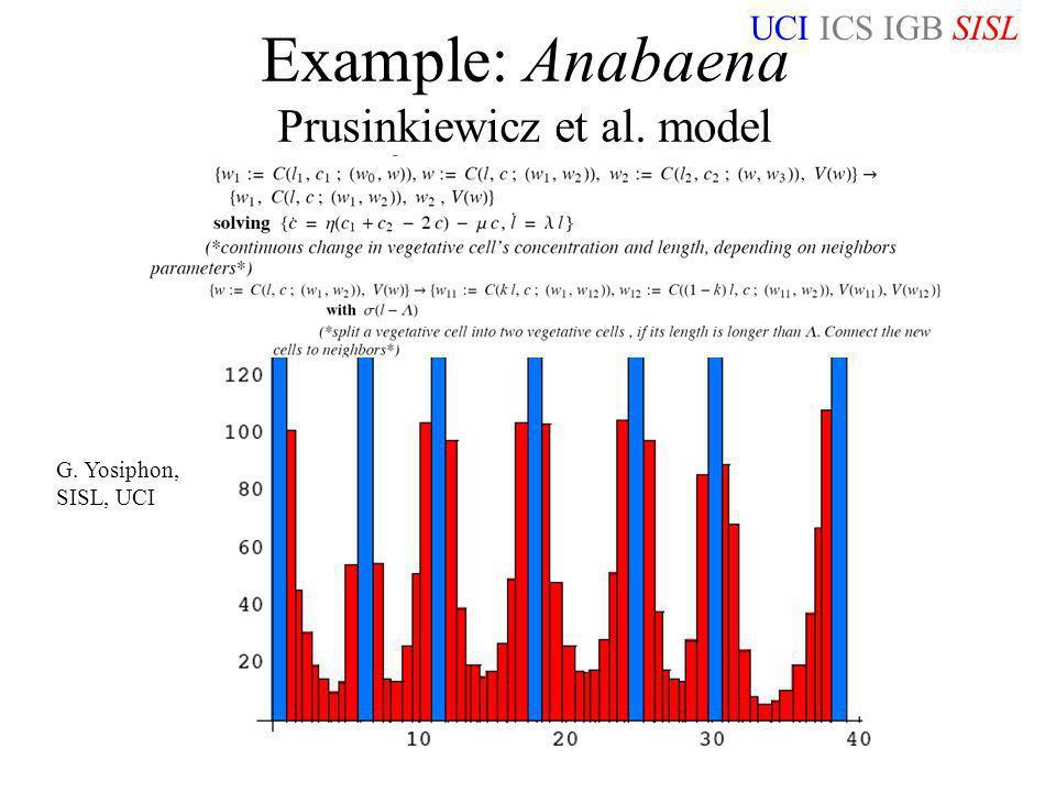 UCI ICS IGB SISL NKS Washington DC 06/15/06 Example: Anabaena Prusinkiewicz et al. model G. Yosiphon, SISL, UCI