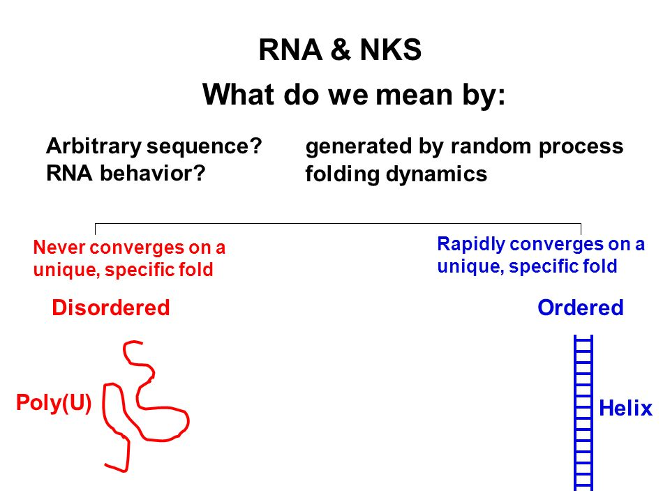 Never converges on a unique, specific fold Rapidly converges on a unique, specific fold What do we mean by: RNA & NKS generated by random processArbitrary sequence.