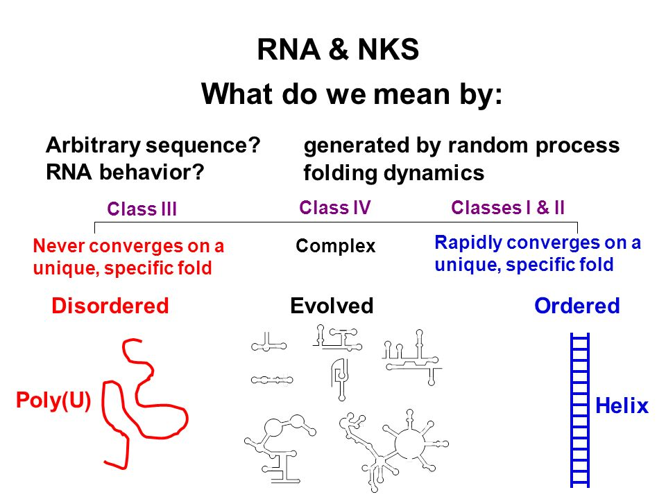 What do we mean by: RNA & NKS generated by random processArbitrary sequence? RNA behavior? folding dynamics Evolved Complex Rapidly converges on a uni