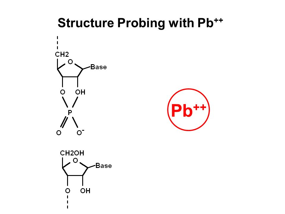 Pb ++ Structure Probing with Pb ++