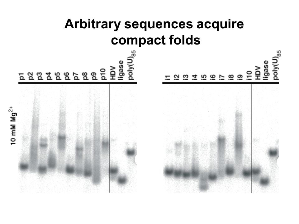 Arbitrary sequences acquire compact folds