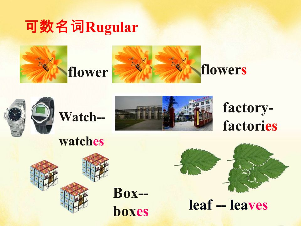flower flowers Watch-- watches factory- factories leaf -- leaves Box-- boxes Rugular