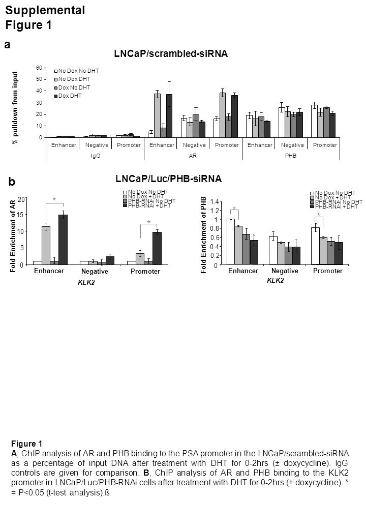 Supplemental Figure 2 a 0 2 4 6 8 10 T0153060120 No Dox +RNAi 0 2 4 6 8 10 T0153060120 Time after DHT treatment Enhancer Promoter No Dox +RNAi Taqman PCR IgG Control Figure 2 A, ChIP analysis of the PSA promoter and enhancer regions with a control rabbit IgG antibody, in LNCaP/Luc/PHB-siRNA cells treated with DHT over 0-2hours.