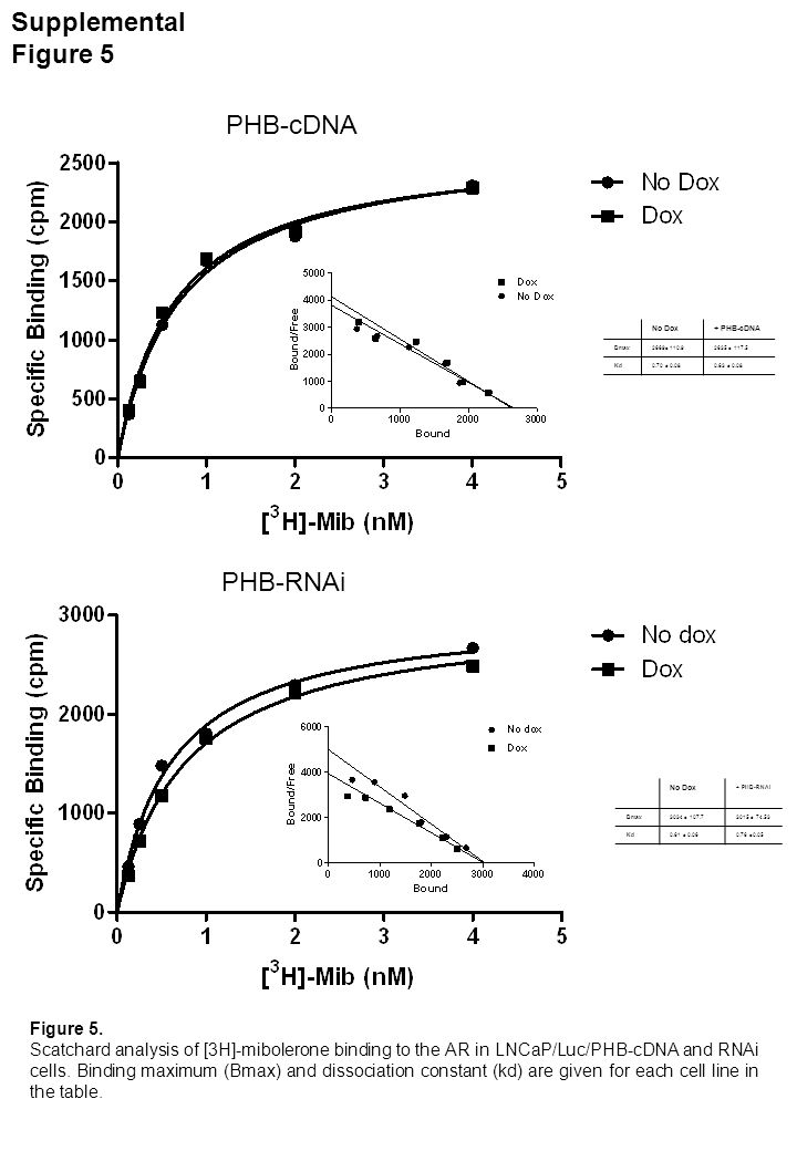 Supplemental Figure 6 0 0.5 1 1.5 -actin TAP1Cyc DCaspase 7YY1TK1 No Dox PHB RNAi Gene expression (fold increase) 0 5 10 15 20 25 TAP1 actin Cyc DPSA Eth DHT Gene expression (fold increase) a 0 0.2 0.4 0.6 0.8 1 1.2 1.4 1.6 - IFN+ IFN- IFN+ IFN No DoxPHB RNAi TAP1 expression (fold increase) c b Figure 6.