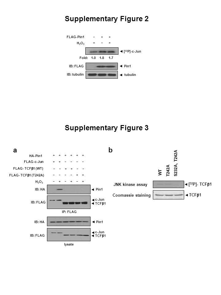 Relative p-JNK level (%) (min) Supplementary Figure 4