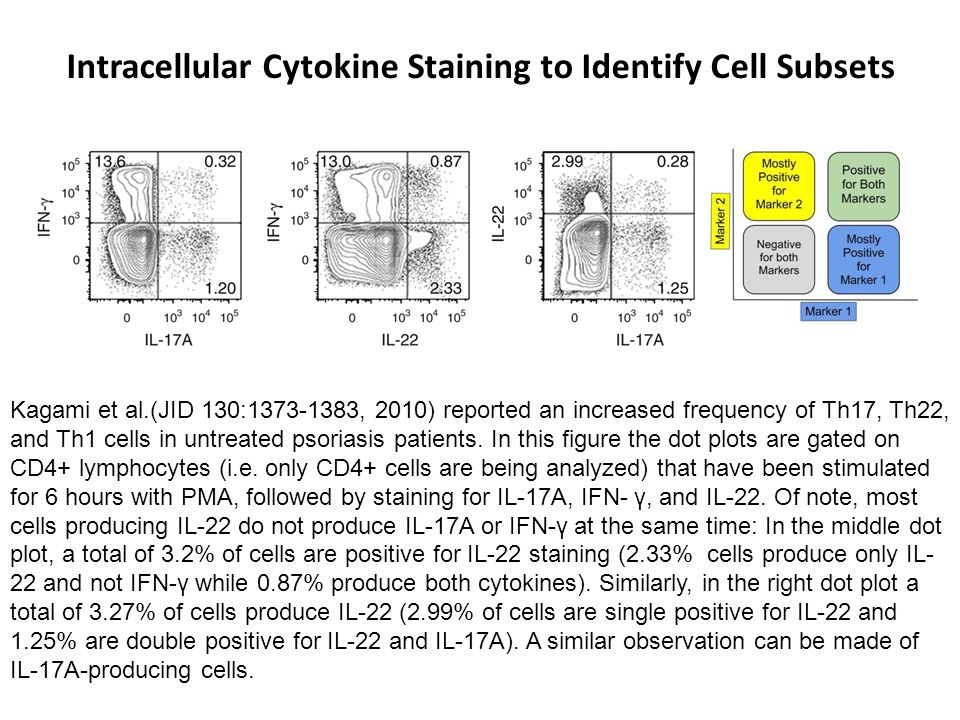 Intracellular Cytokine Staining to Identify Cell Subsets Kagami et al.(JID 130:1373-1383, 2010) reported an increased frequency of Th17, Th22, and Th1