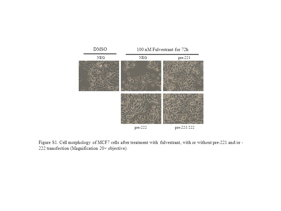 NEGpre-221 pre-222pre-221/222 NEG DMSO 100 nM Fulvestrant for 72h Figure S1. Cell morphology of MCF7 cells after treatment with fulvestrant, with or w