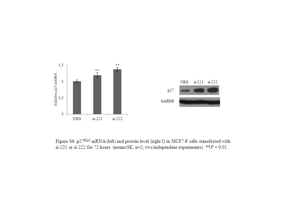 GAPDH p27 NEG si-221 si-222 Figure S6. p27 Kip1 mRNA (left) and protein level (right l) in MCF7-F cells transfected with si-221 or si-222 for 72 hours