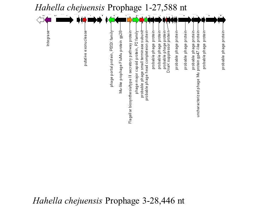 Hahella chejuensis Prophage 1-27,588 nt Hahella chejuensis Prophage 3-28,446 nt