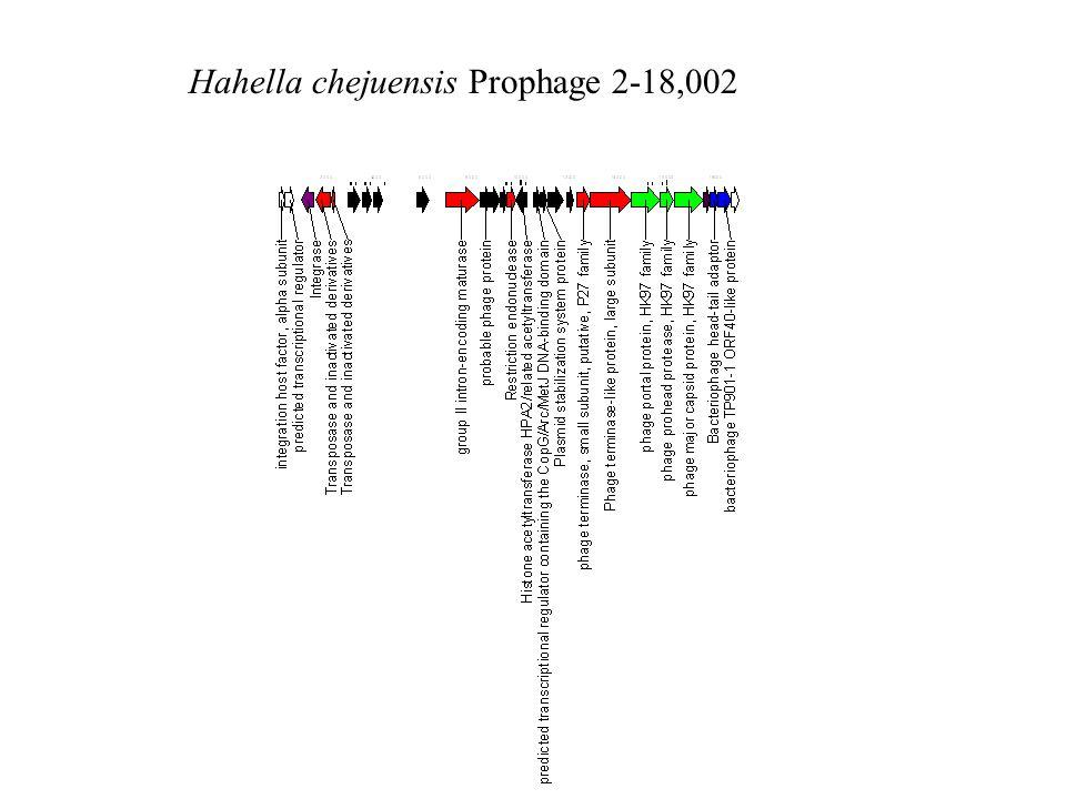 Hahella chejuensis Prophage 2-18,002