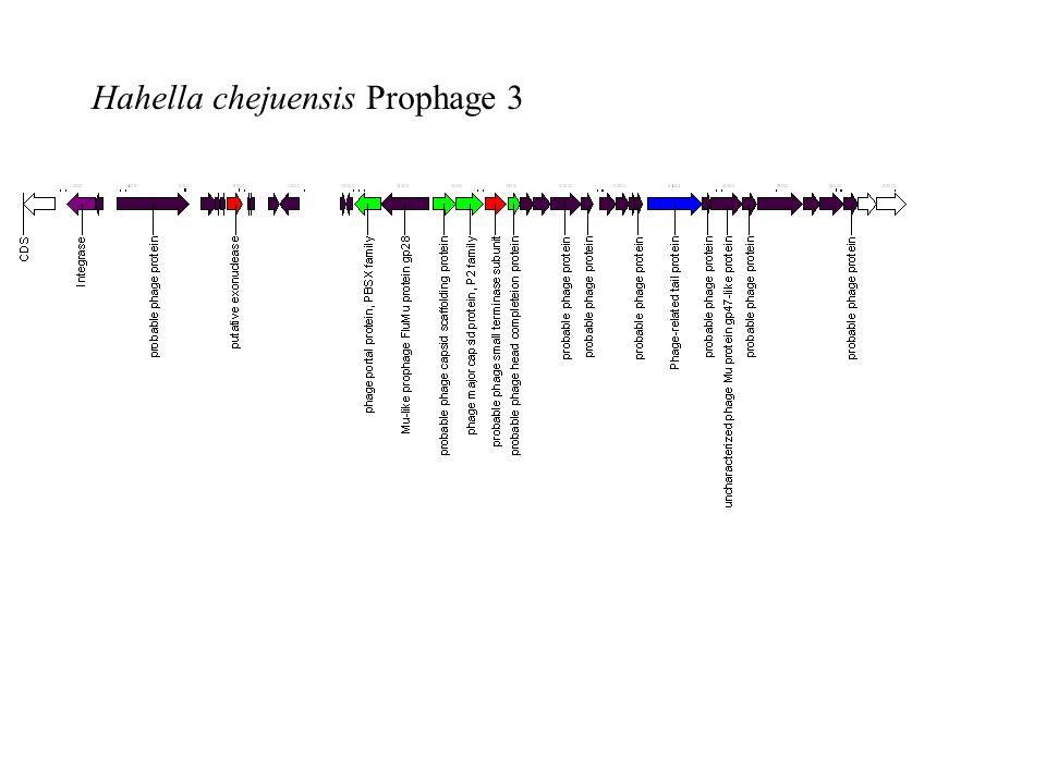 Hahella chejuensis Prophage 3