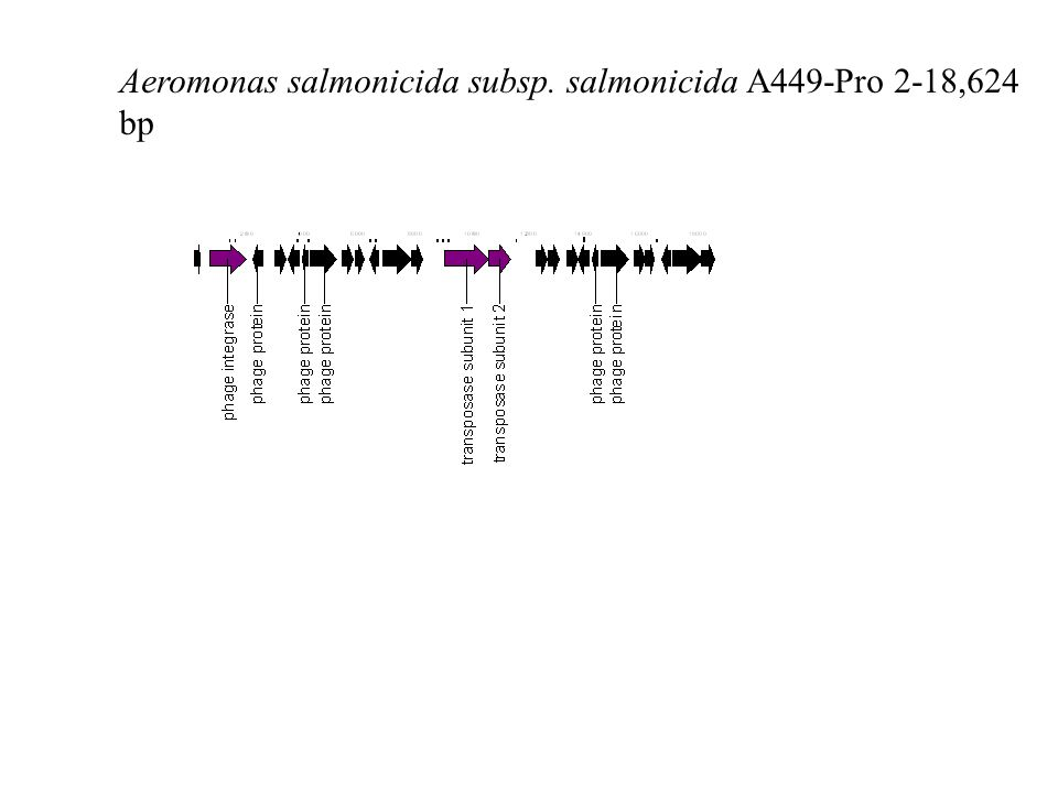 Aeromonas salmonicida subsp. salmonicida A449-Pro 2-18,624 bp