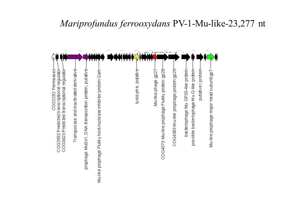 Mariprofundus ferrooxydans PV-1-Mu-like-23,277 nt