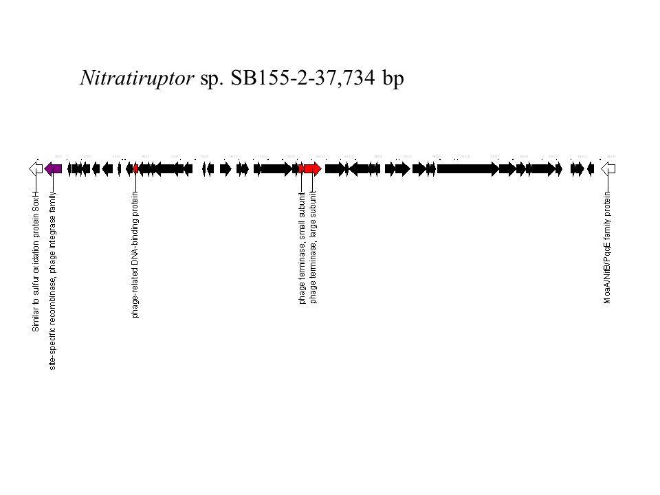 Nitratiruptor sp. SB155-2-37,734 bp