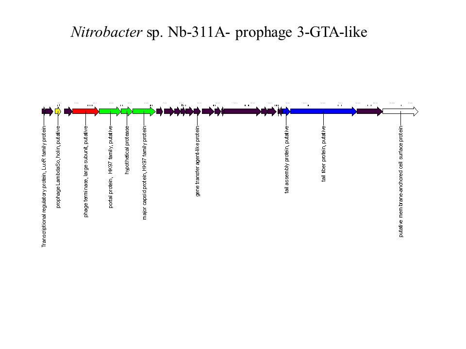 Nitrobacter sp. Nb-311A- prophage 3-GTA-like