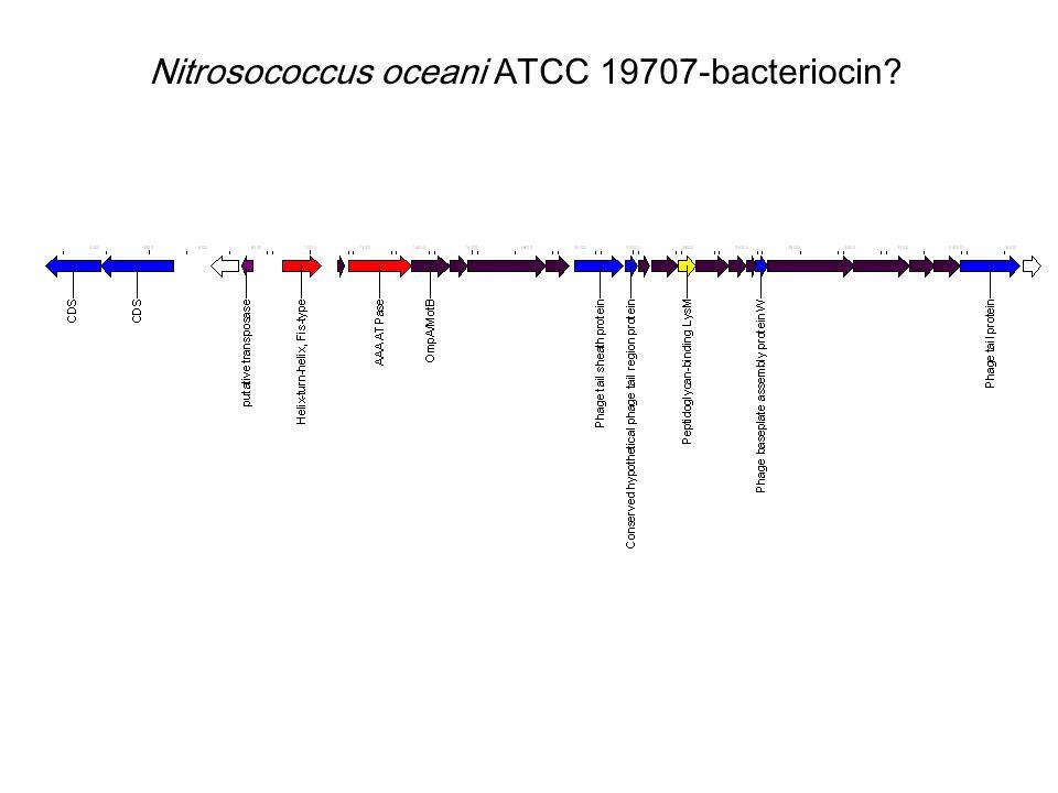 Nitrosococcus oceani ATCC 19707-bacteriocin?