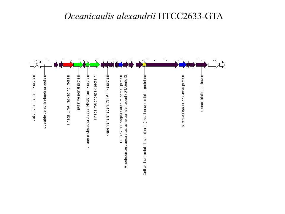 Oceanicaulis alexandrii HTCC2633-GTA