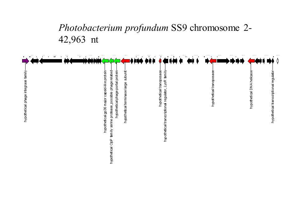 Photobacterium profundum SS9 chromosome 2- 42,963 nt