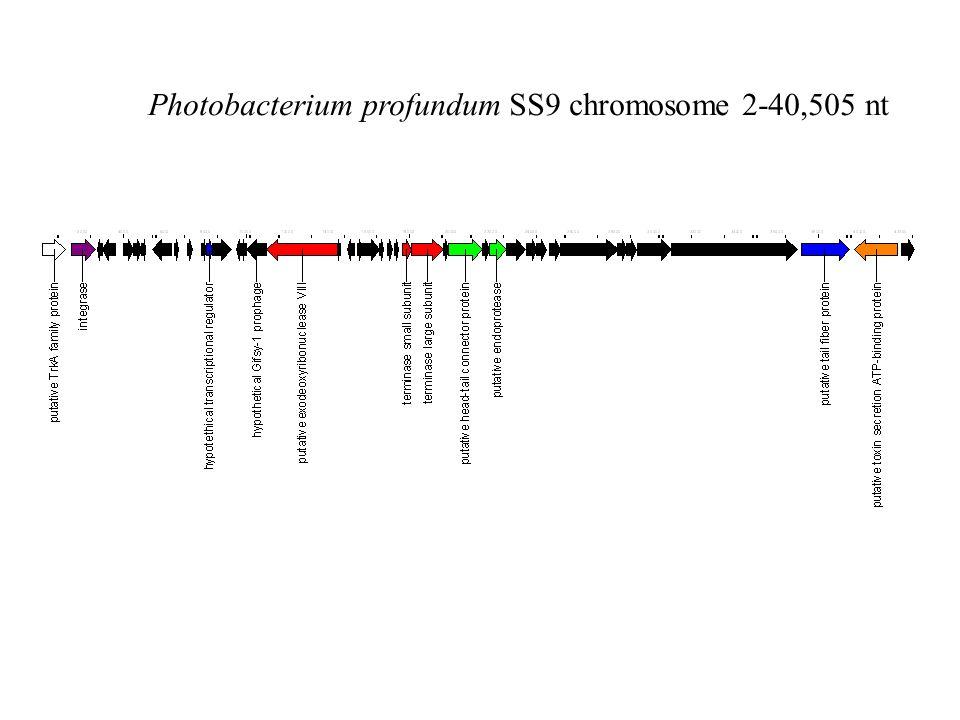 Photobacterium profundum SS9 chromosome 2-40,505 nt