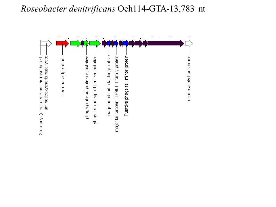 Roseobacter denitrificans Och114-GTA-13,783 nt