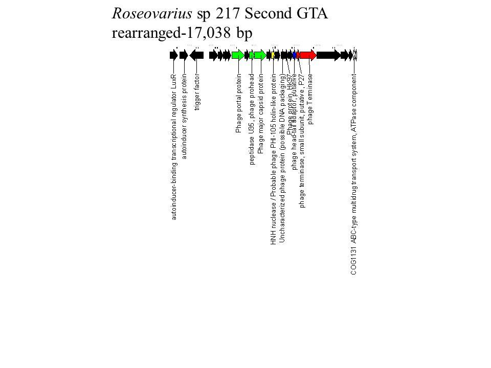 Roseovarius sp 217 Second GTA rearranged-17,038 bp
