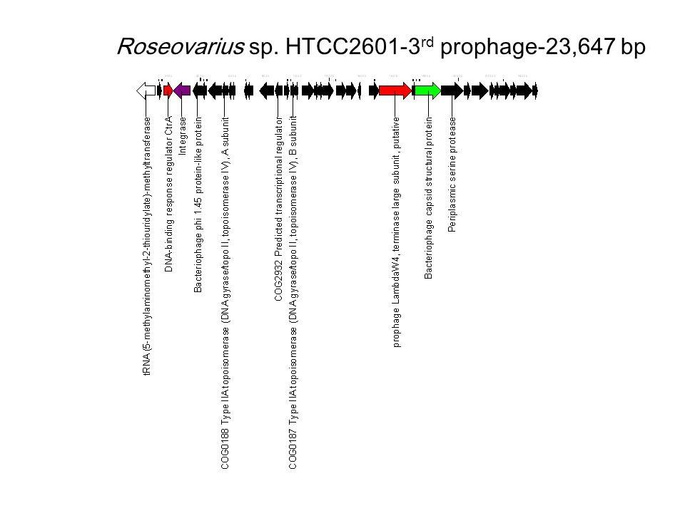 Roseovarius sp. HTCC2601-3 rd prophage-23,647 bp