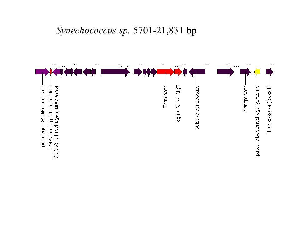 Synechococcus sp. 5701-21,831 bp