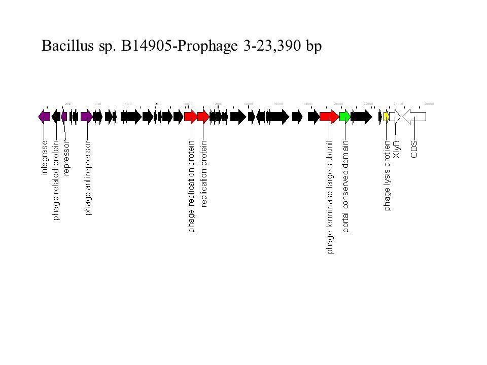 Bacillus sp. B14905-Prophage 3-23,390 bp