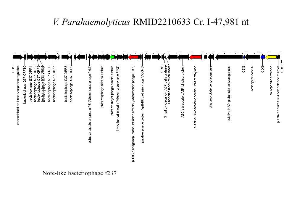 V. Parahaemolyticus RMID2210633 Cr. I-47,981 nt Note-like bacteriophage f237