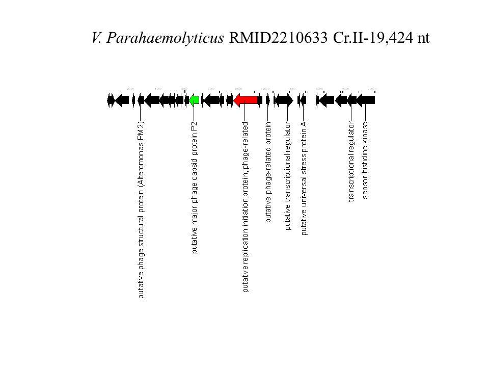 V. Parahaemolyticus RMID2210633 Cr.II-19,424 nt
