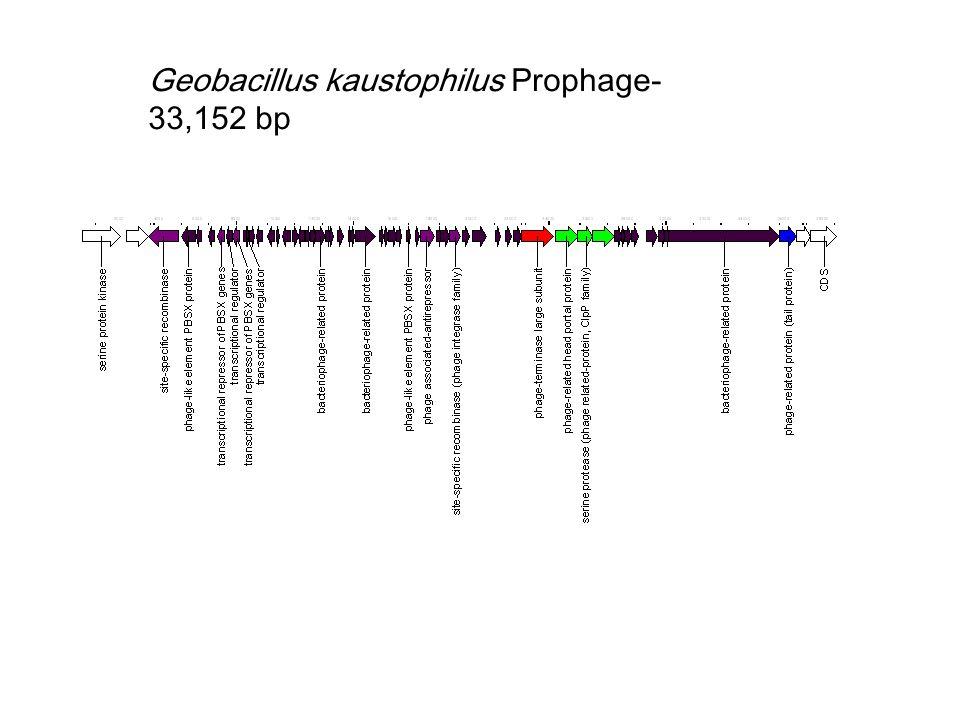 Geobacillus kaustophilus Prophage- 33,152 bp