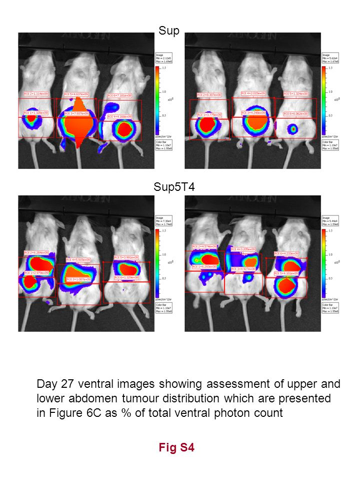 Fig S4 Sup Sup5T4 Day 27 ventral images showing assessment of upper and lower abdomen tumour distribution which are presented in Figure 6C as % of tot