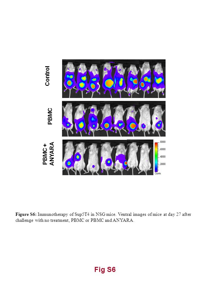 Fig S6 Control PBMC PBMC + ANYARA Figure S6: Immunotherapy of Sup5T4 in NSG mice. Ventral images of mice at day 27 after challenge with no treatment,
