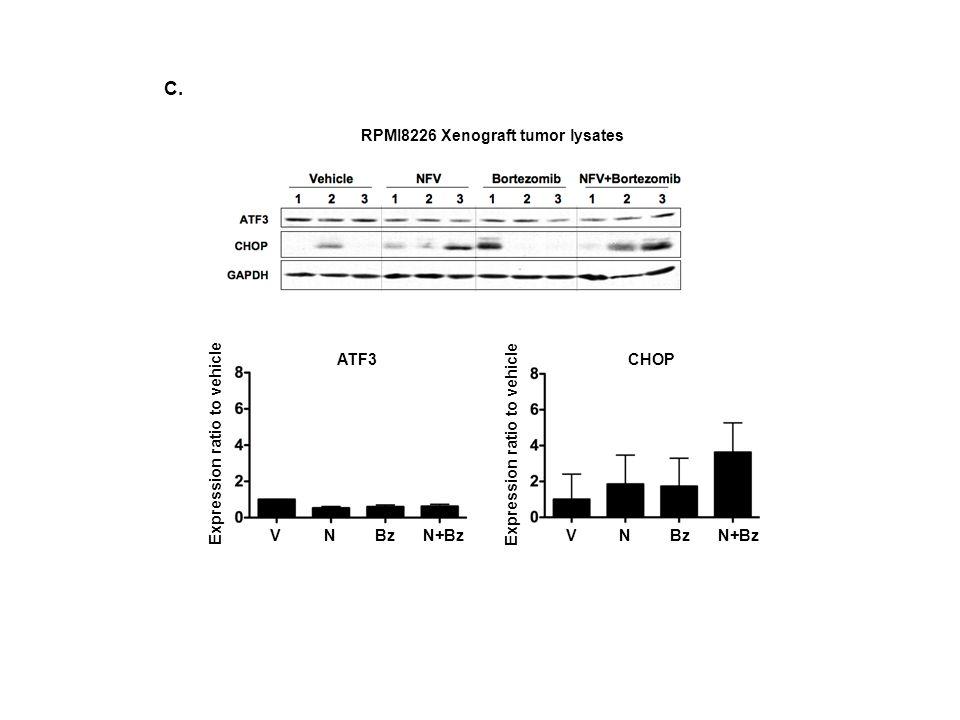 RPMI8226 Xenograft tumor lysates C. ATF3 VNBzN+Bz Expression ratio to vehicle CHOP Expression ratio to vehicle VNBzN+Bz
