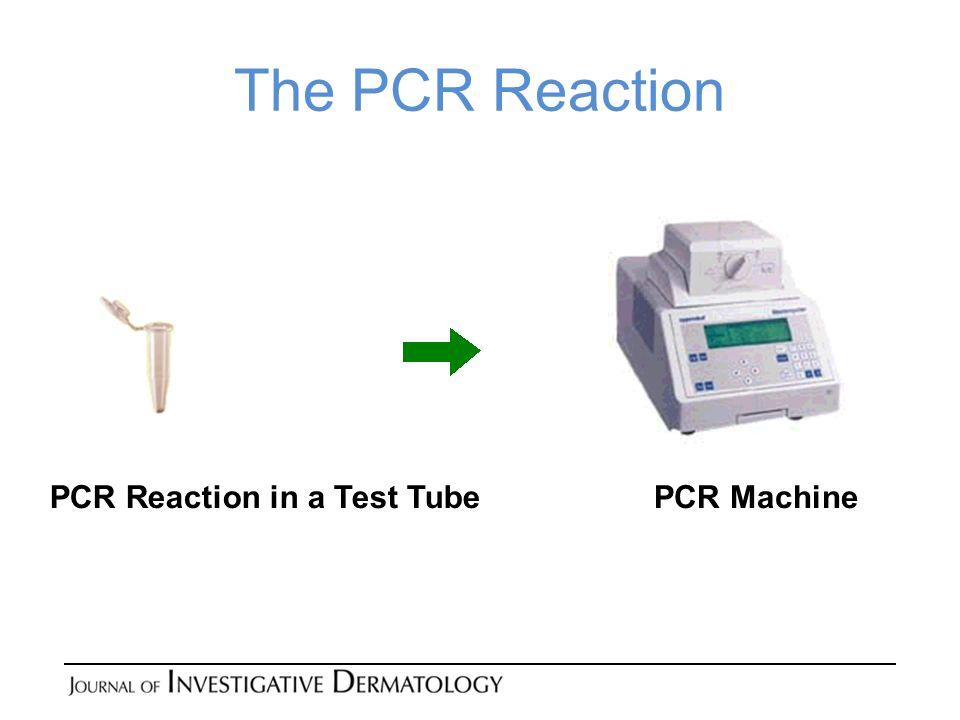 The PCR Reaction PCR MachinePCR Reaction in a Test Tube