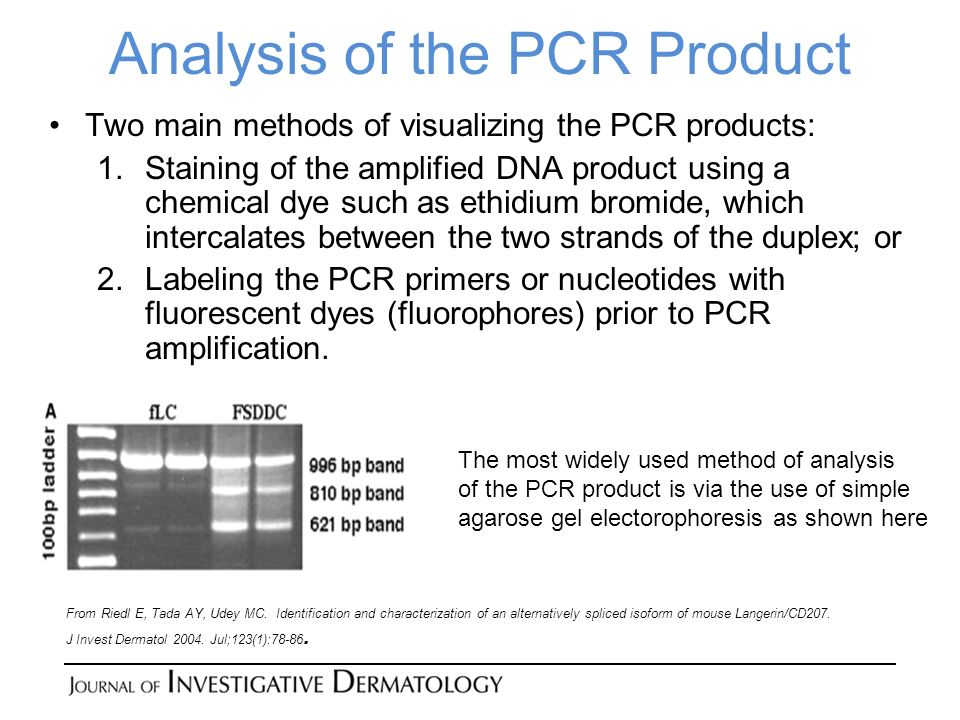 Analysis of the PCR Product Two main methods of visualizing the PCR products: 1.Staining of the amplified DNA product using a chemical dye such as ethidium bromide, which intercalates between the two strands of the duplex; or 2.Labeling the PCR primers or nucleotides with fluorescent dyes (fluorophores) prior to PCR amplification.