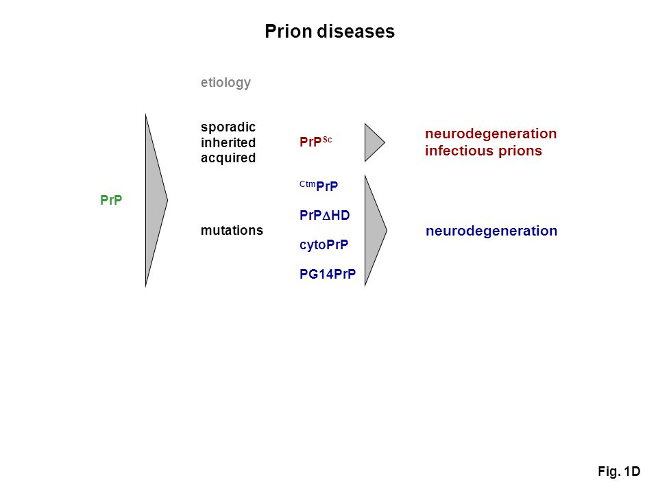 Prion diseases PrP Ctm PrP PrP HD cytoPrP PG14PrP PrP Sc neurodegeneration infectious prions neurodegeneration etiology sporadic inherited acquired mutations Fig.