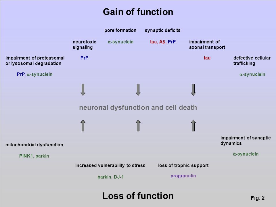Gain of function Loss of function neurotoxic signaling PrP synaptic deficits tau, A, PrP impairment of axonal transport tau pore formation -synuclein