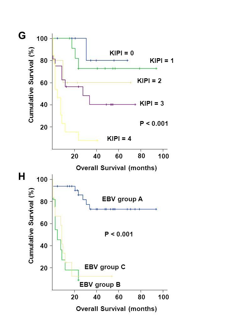 204060 80 100 20 40 60 80 100 Overall Survival (months) Cumulative Survival (%) P < 0.001 KIPI = 4 KIPI = 3 KIPI = 2 KIPI = 1 KIPI = 0 204060 80 100 20 40 60 80 100 Overall Survival (months) Cumulative Survival (%) EBV group A EBV group B EBV group C P < 0.001 G H
